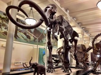 Visiter New York Musée d'histoire naturelle